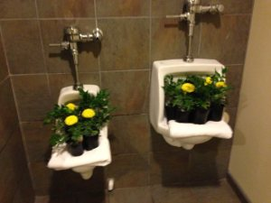 Mums for Moms and sisters in the urinals of the men's room!
