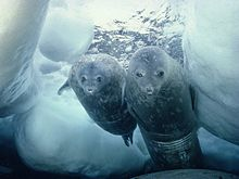 Seals looking for a copy of Grendel's Mother
