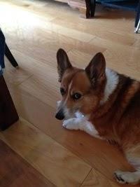 Gwen, uncharacteristically not barking