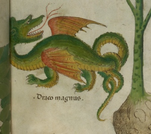 Dragon in fifteenth-century Italian herbal. © The British Library, Sloane 4016, f. 38